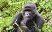 Mgahinga Gorilla National Park, Rwanda